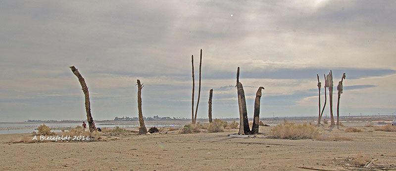 Salton Sea Photograph - Trees by April Bielefeldt