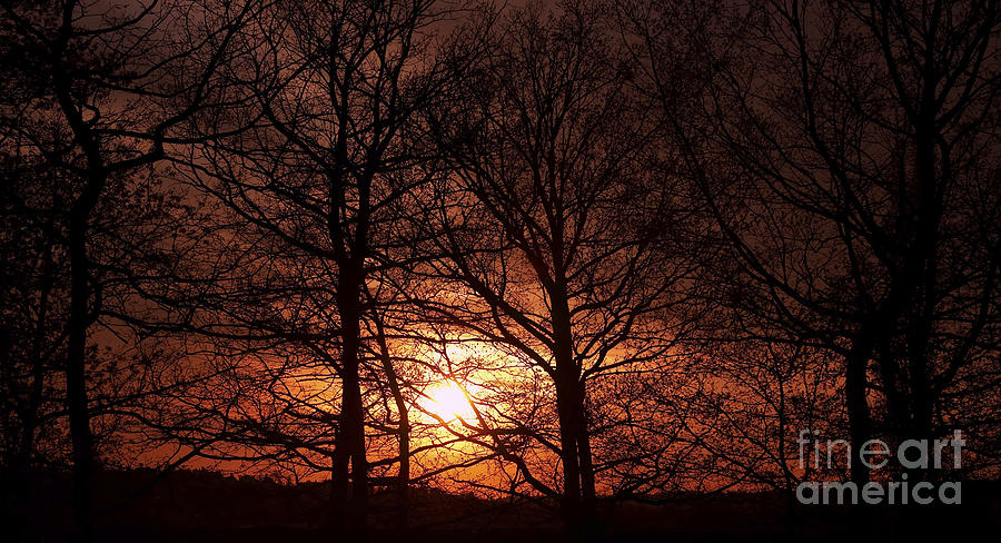 Sunset Photograph - Trees At Sunset by Michal Boubin