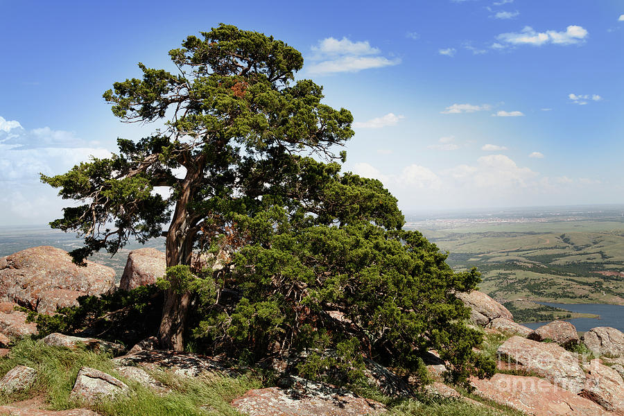 Trees At The Top Photograph