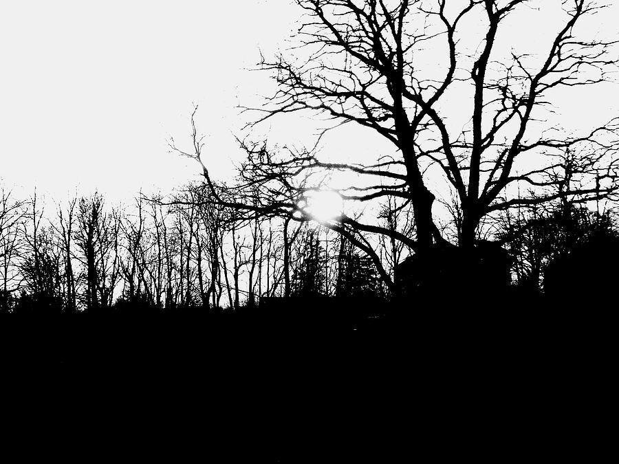 Trees Photograph by Bob Plimac