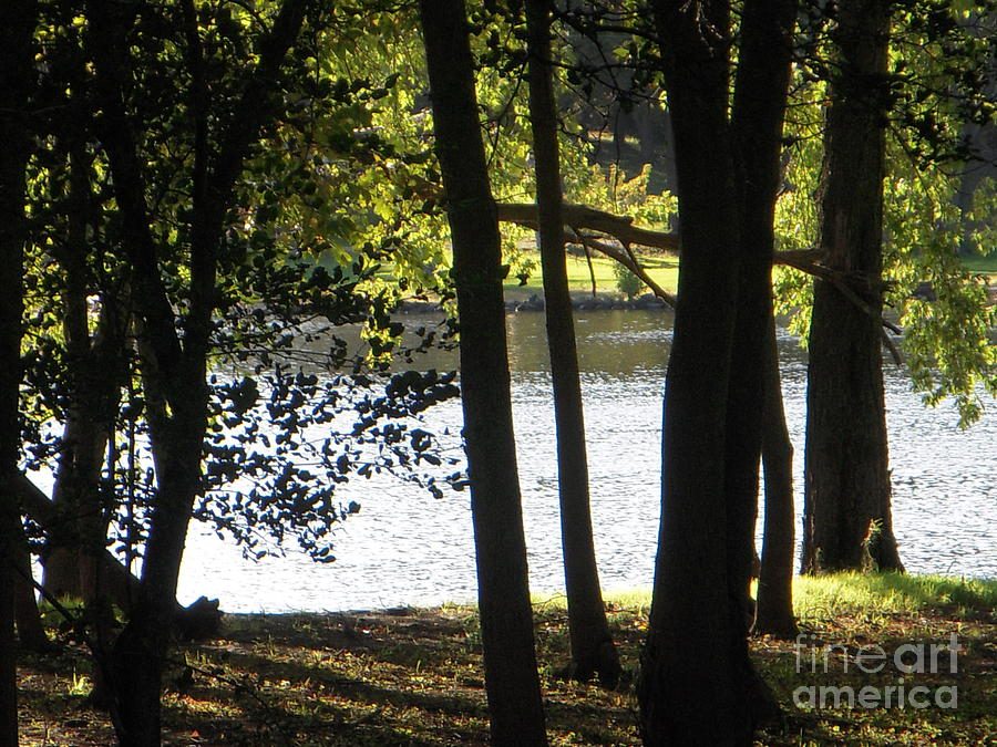 Trees Photograph - Trees By Rivers Of Water by Deborah Finley
