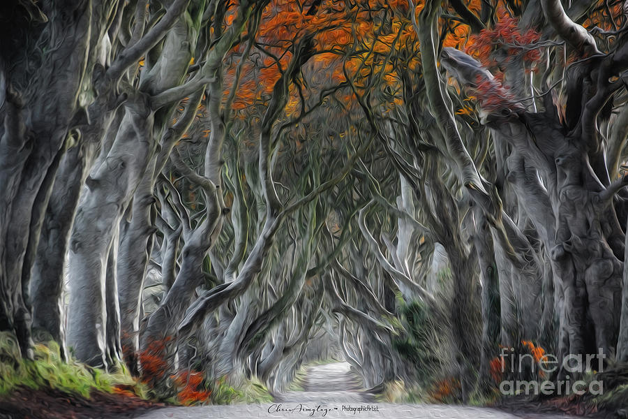 Trees Painting - Trees Embracing by Chris Armytage