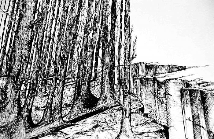 Trees Drawing by Emily Cash