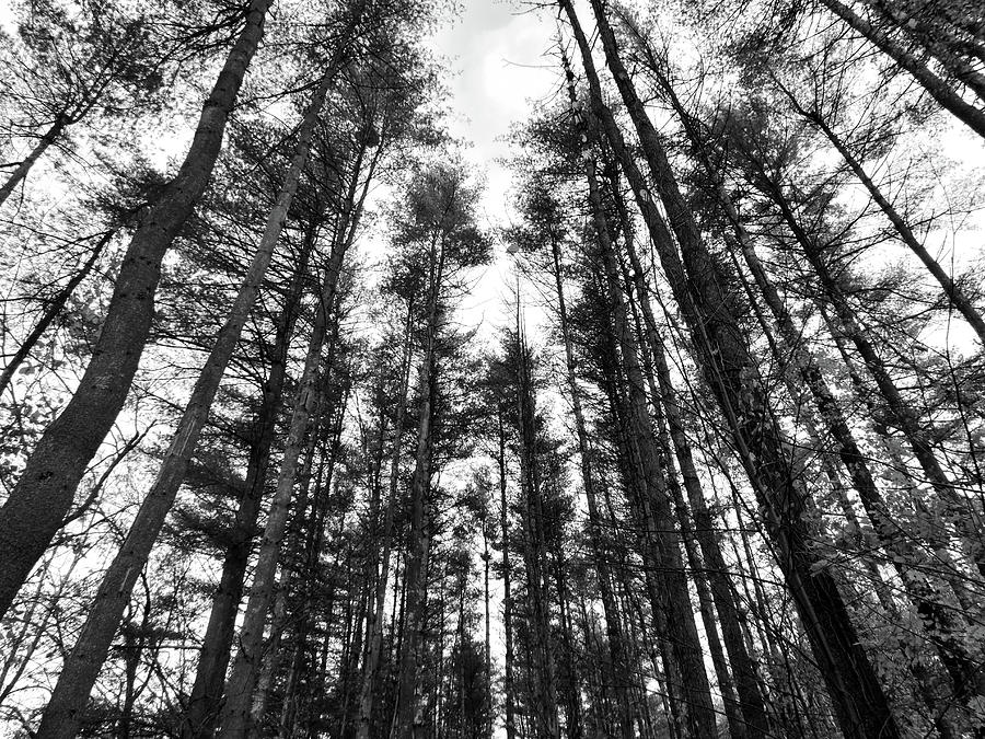 Trees Photograph by Eric Radclyffe