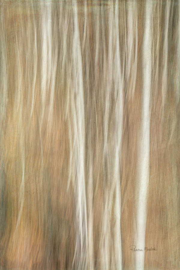 Trees Digital Art - Trees Ethereal Thicket by Ramona Murdock
