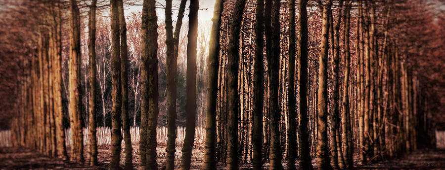 Trees Photograph - Trees Gathering by Wim Lanclus