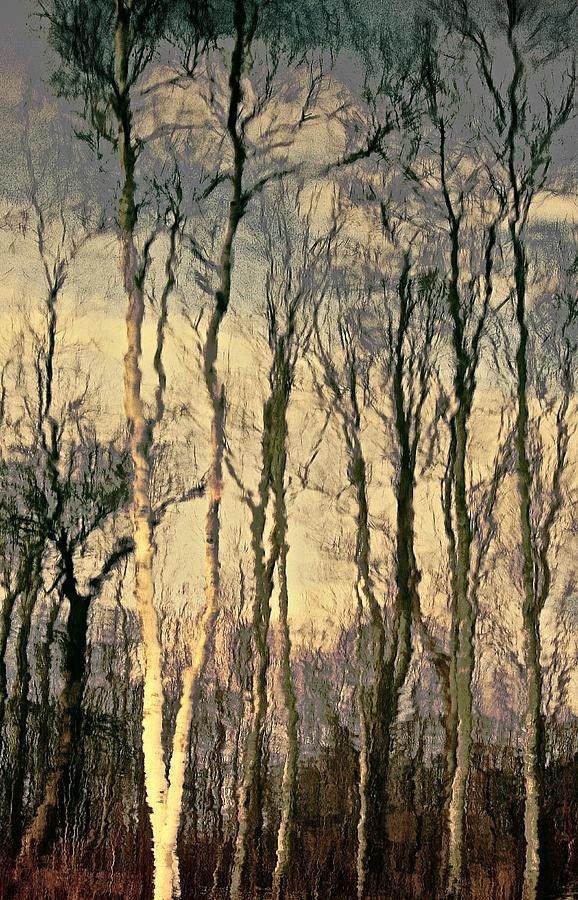 Forest Photograph - Trees by Gillis Cone