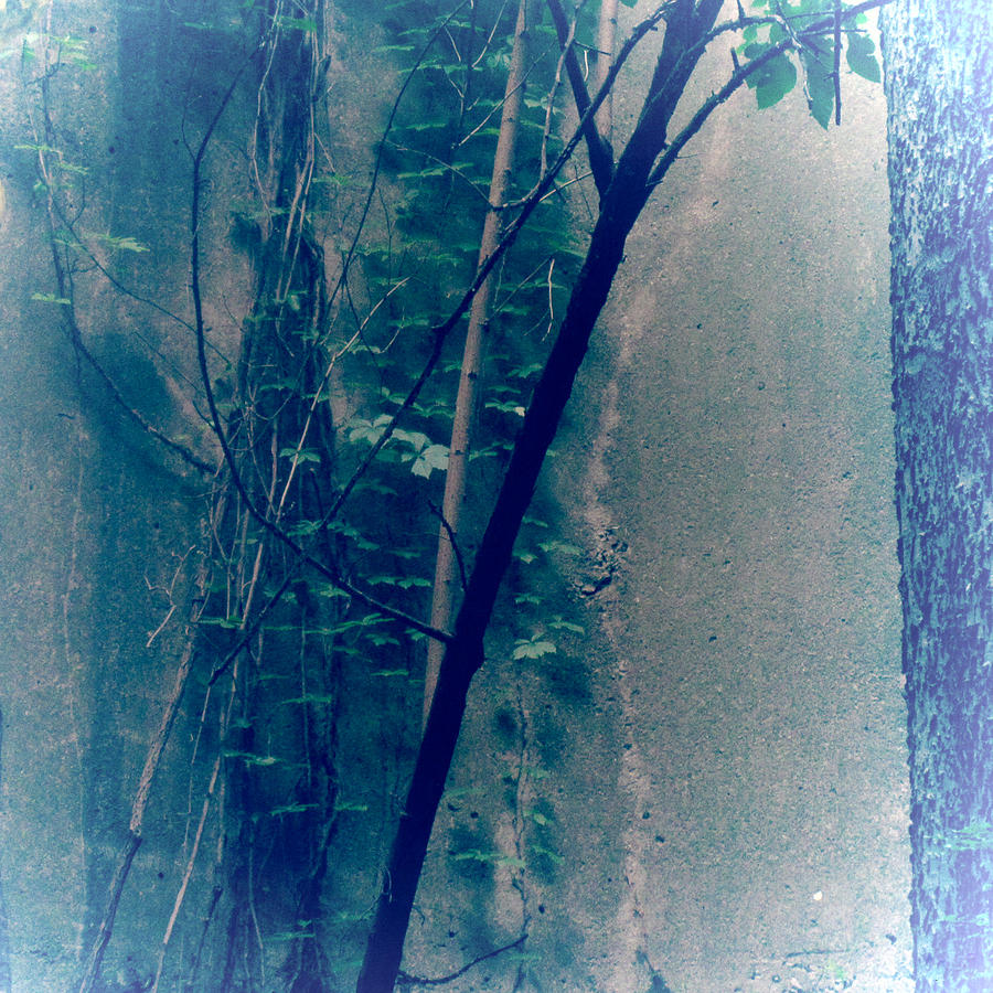 Silo Photograph - Trees Growing In Silo Abstract- Square 2015 Edition by Tony Grider