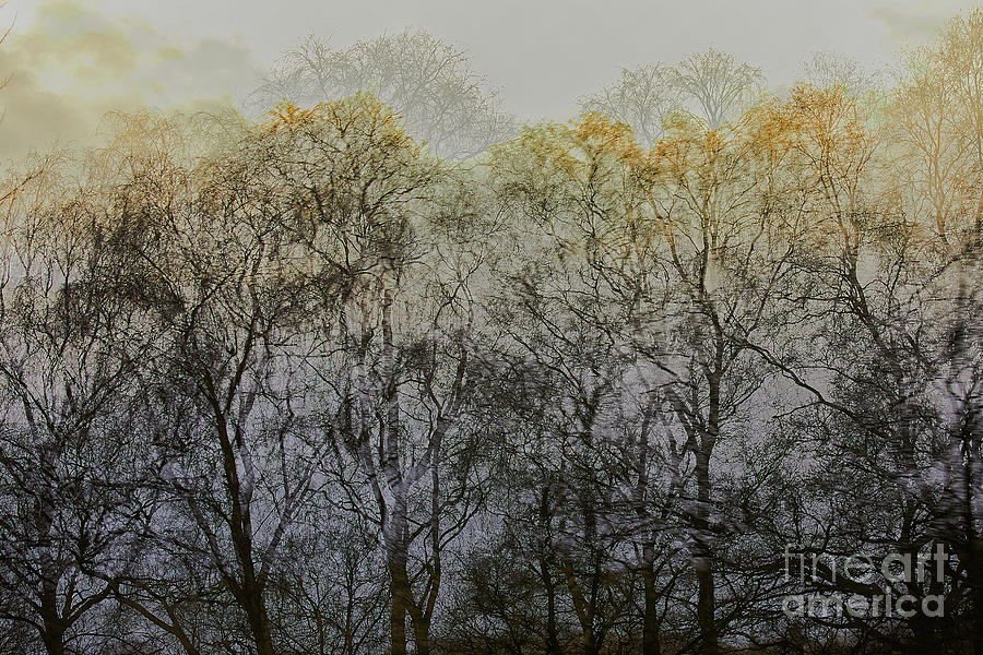 Trees Illuminated By Faint Sunshine, Double Exposed Image Photograph