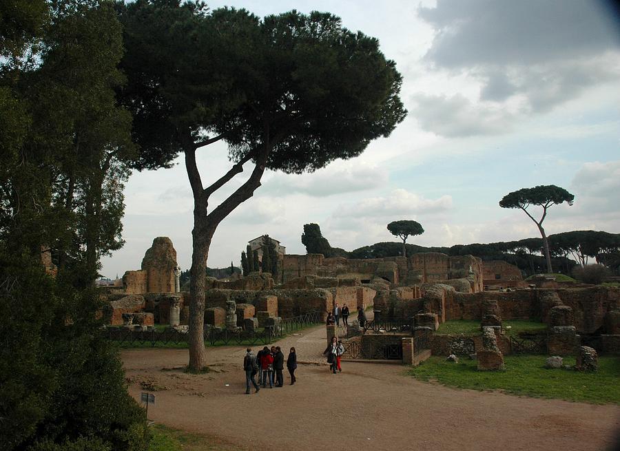 Tress Photograph - Trees In Ancient Roman Ruins by Joseph Cossolini