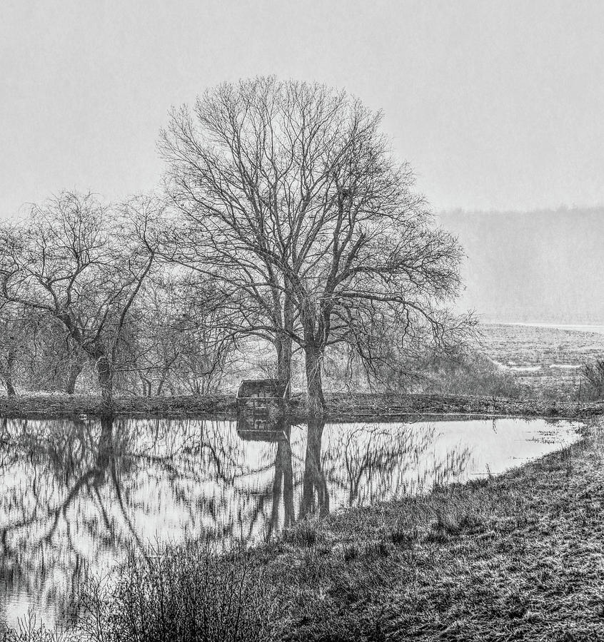Winter Photograph - Trees In Fog Kennebunk Maine by David Smith