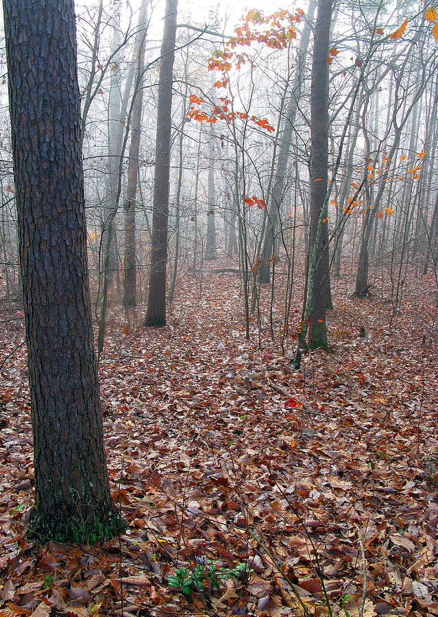 Trees Photograph - Trees In Foggy Fall Woods by Richard Singleton