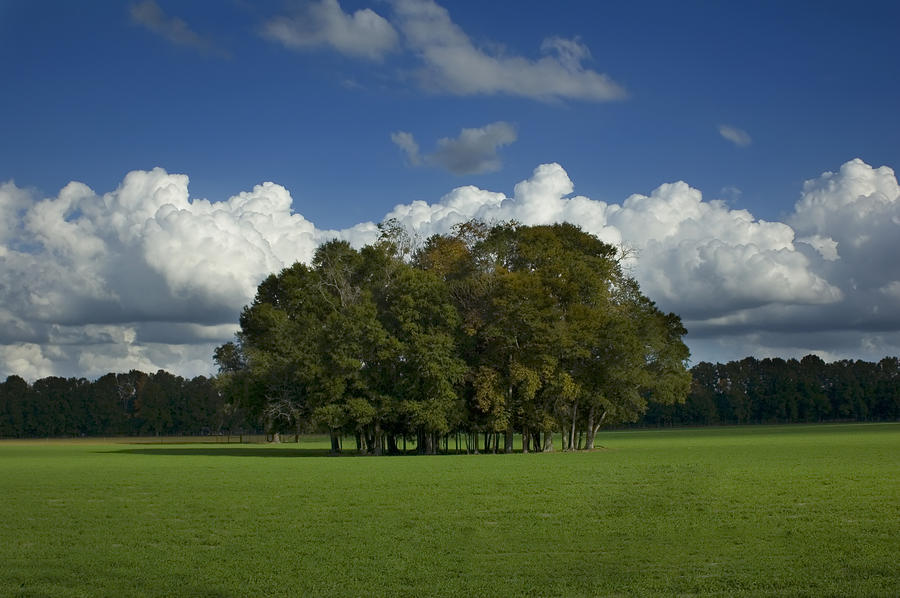 Agricultural Photograph - Trees In Grass Field by Stacey Lynn Payne