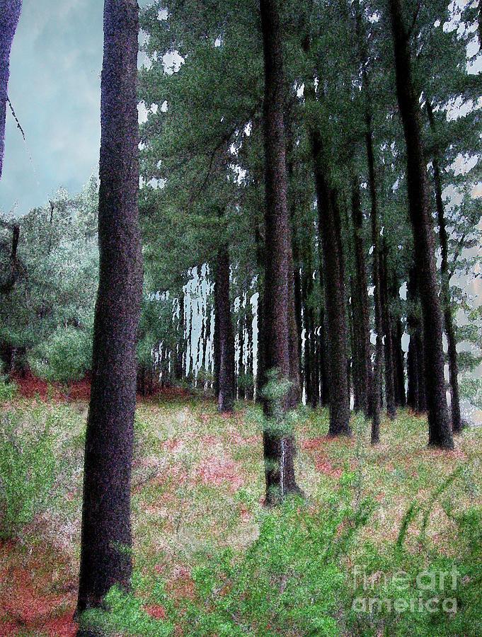 Trees Digital Art - Trees In Harriman by Alan Del Vecchio