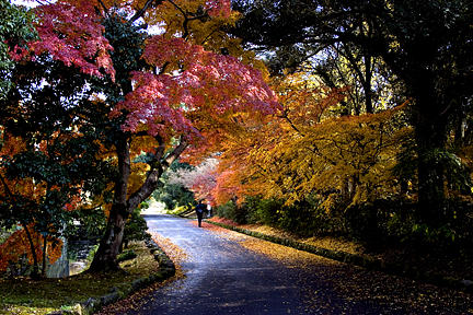 Trees Photograph - Trees In Japan 1 by George Cabig