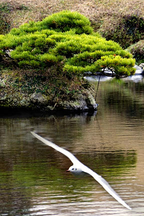Trees Photograph - Trees In Japan 14 by George Cabig