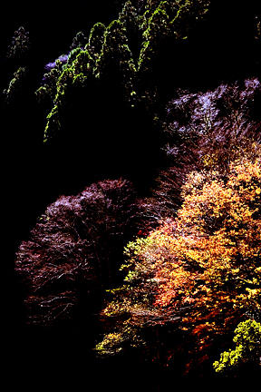 Trees Photograph - Trees In Japan 3 by George Cabig
