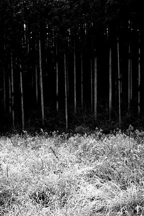 Forest Photograph - Trees In Japan 4 by George Cabig