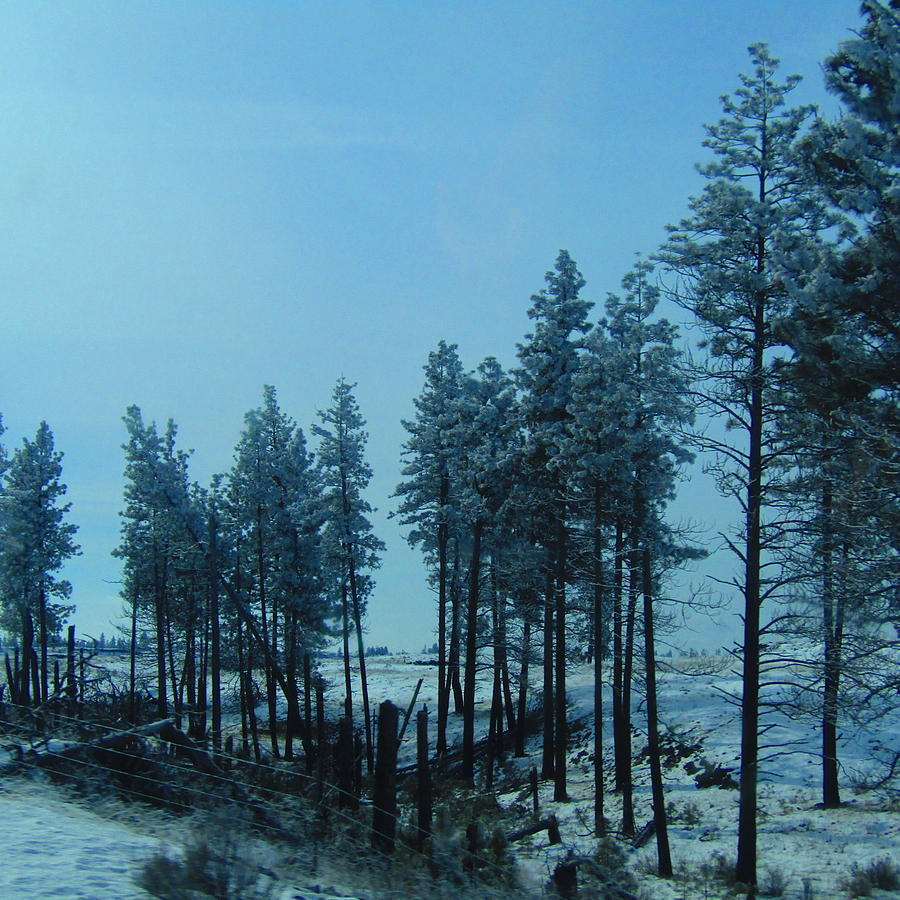Trees Photograph - Trees In Northwest by Romelette Metz