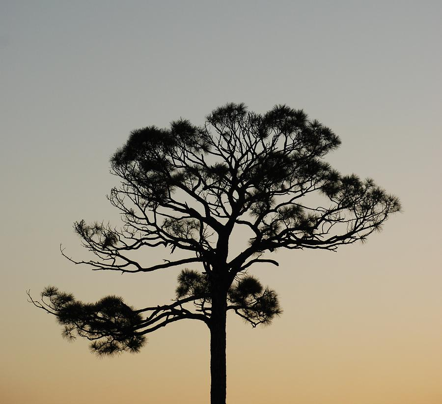 Tree Photograph - Trees In Sunset by Rob Hans