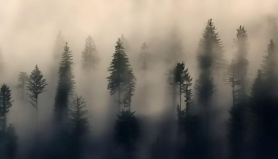 Trees In The Fog Photograph