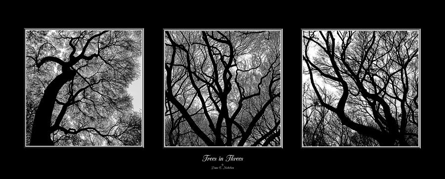 Black And White Photograph - Trees In Threes by Diane C Nicholson
