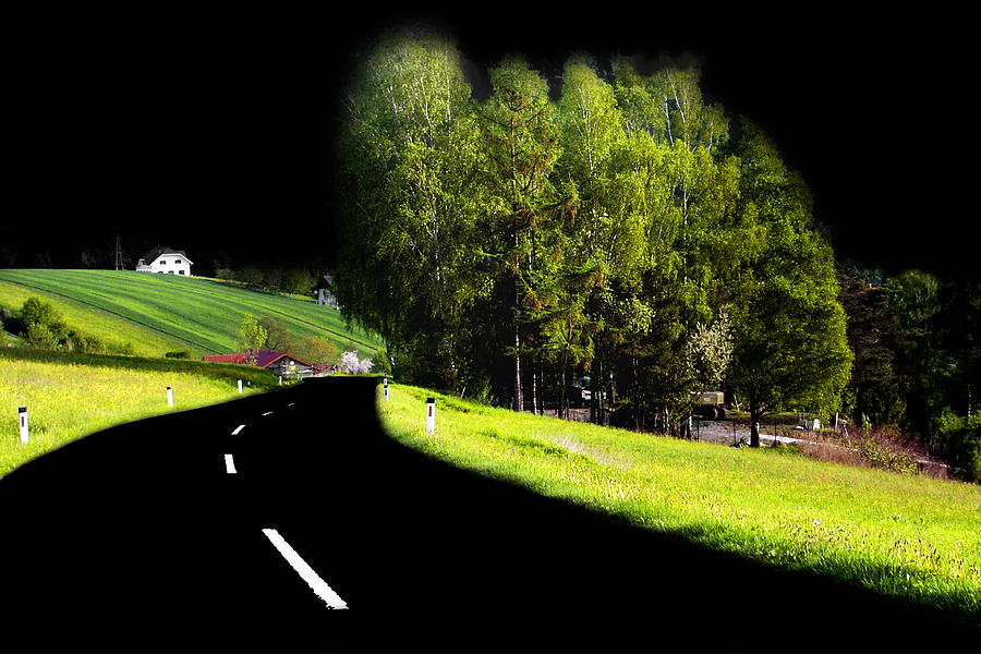 Tree Photograph - Trees In Upper Austria by Sascha Meyer