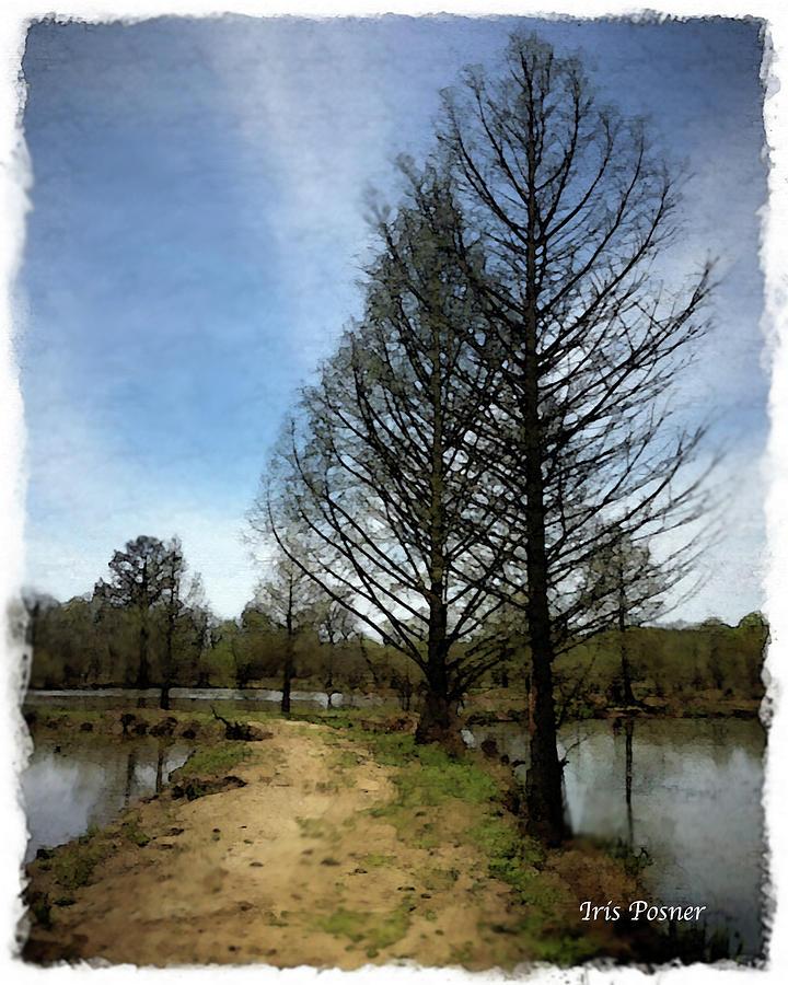 Trees In Water Garden Digital Art by Iris Posner