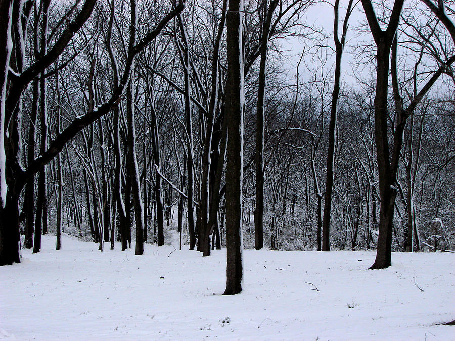 Trees Photograph - Trees In Winter by Dave Clark