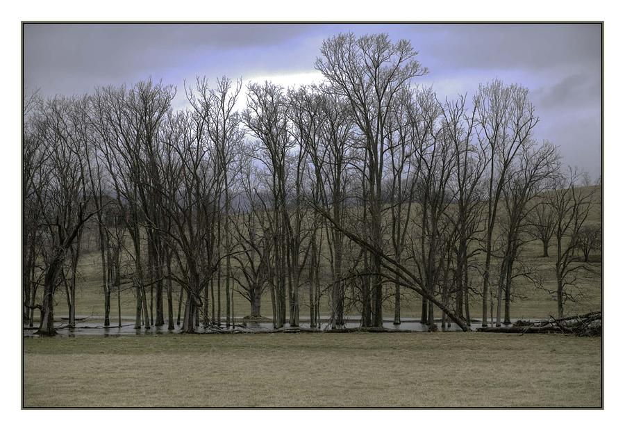 Trees In Winter Photograph by R Thomas Berner