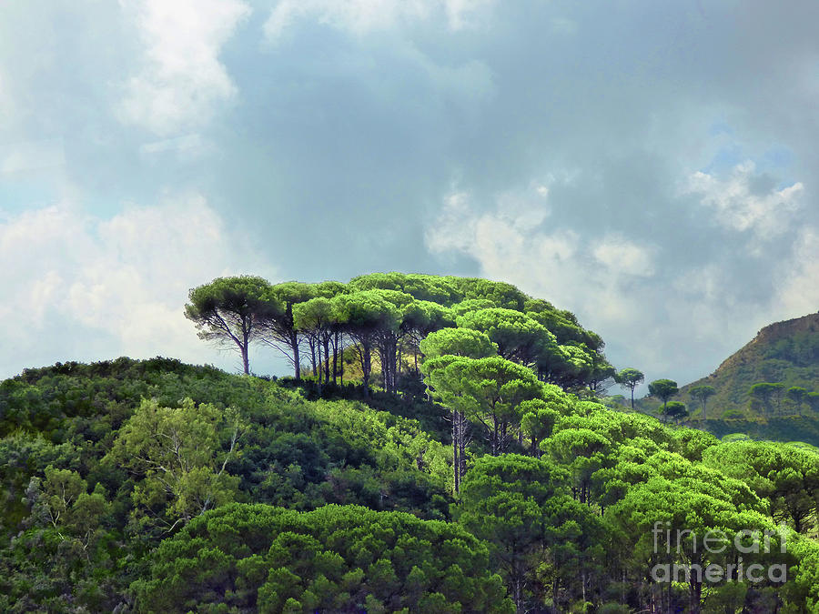 Trees Of Sicily Landscape Photograph