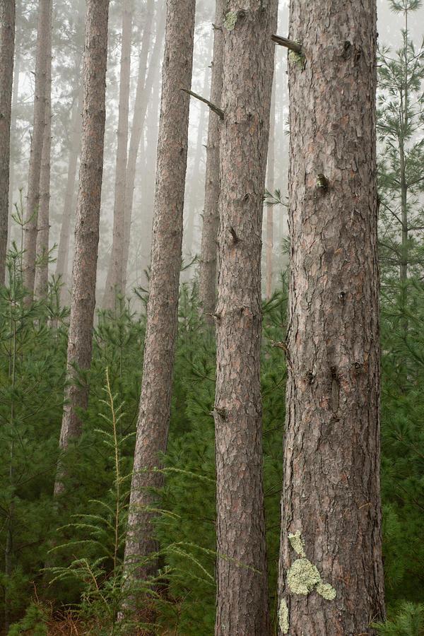 Trees On A Foggy Autumn Day 3 Photograph