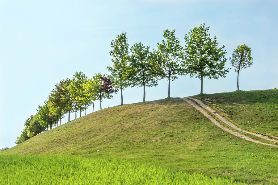 Trees On Hill With Path Photograph