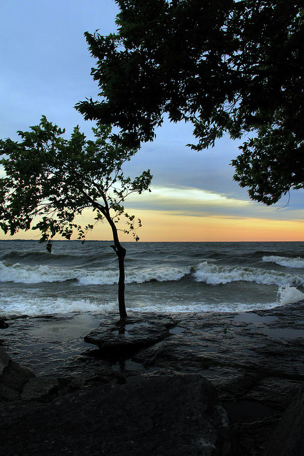 Lake Erie Photograph - Trees over the Lake by Angela Murdock