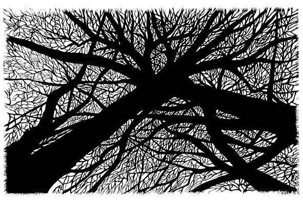 Trees Print - Trees by Patricia Mado