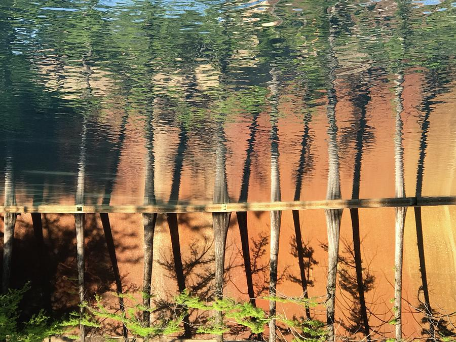 Trees Photograph - Trees Reflecting by Ken Kirk