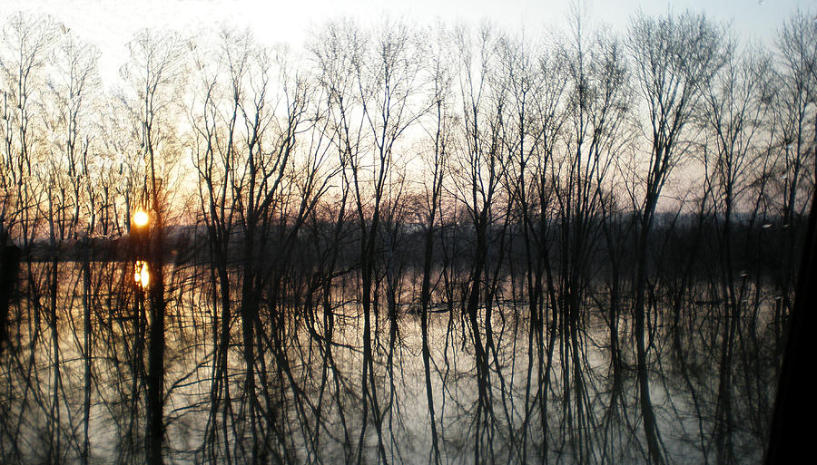 Sunset Photograph - Trees Reflecting On The Water by Martie DAndrea
