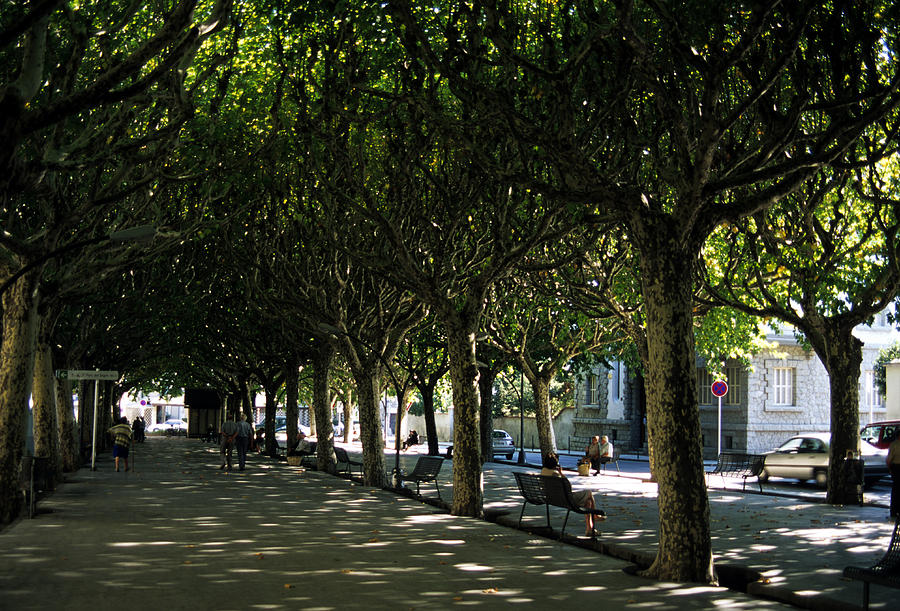 Trees shade la rambla in barcelona photograph by stacy gold - Trees for shade in small spaces concept ...