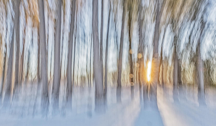 New England Photograph - Trees, Snow And Golden Light Abstract by Scott Snyder