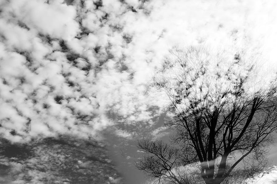 Clouds Photograph - Trees Spirit by Munir Alawi