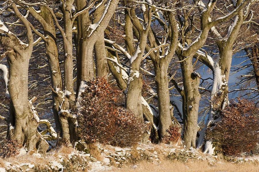 Trees Photograph - Trees by Sue Arber