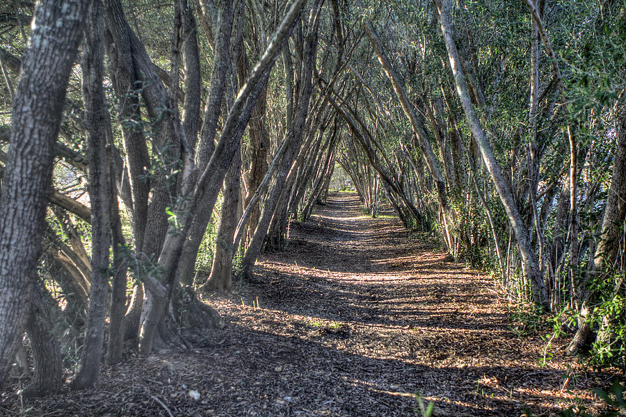 Landscapes Photograph - Trees Under Cover 3 by SC Heffner