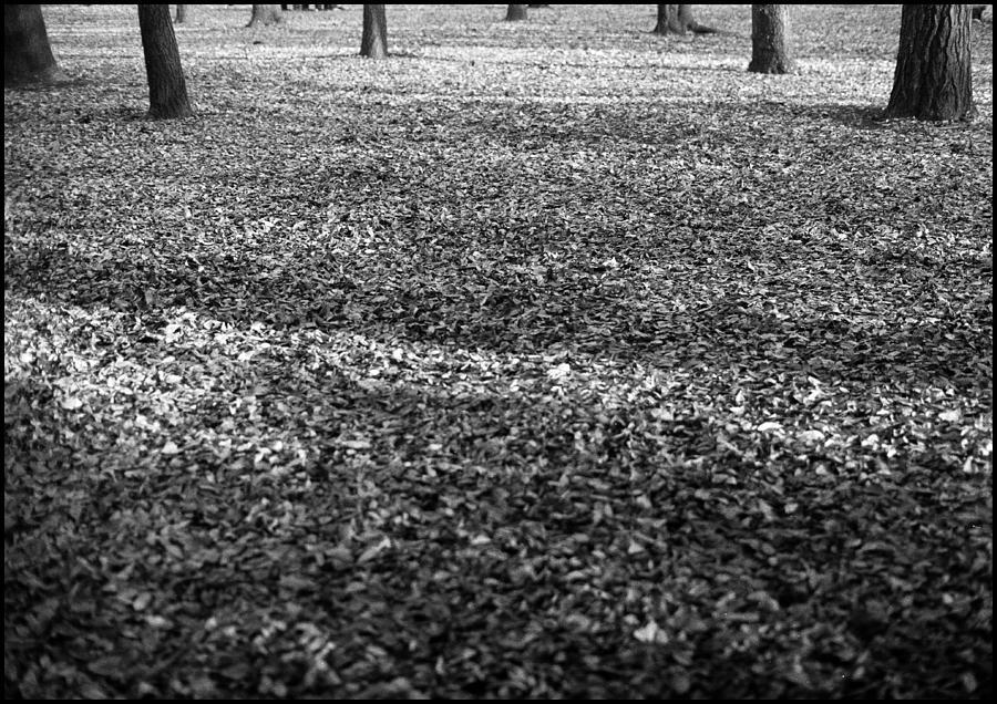 Trees Photograph - Trees Yoyogi Park Tokyo by Werner Hammerstingl