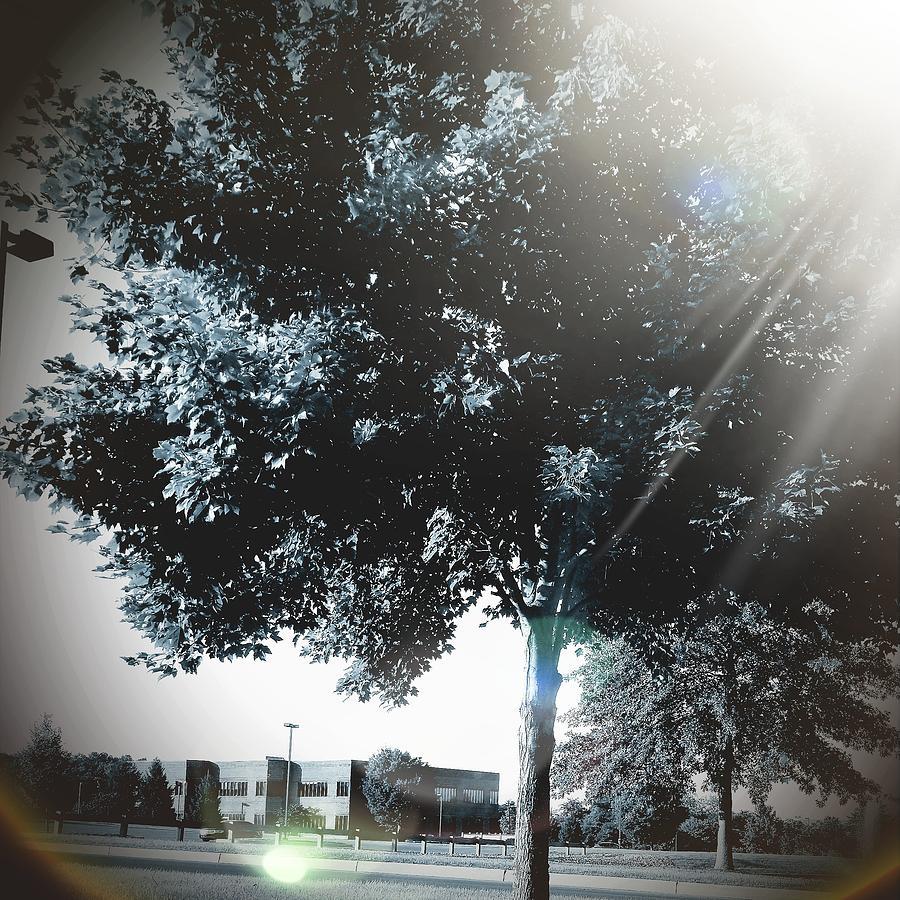 Tree Digital Art - Treeson by Katie Irwin Flather