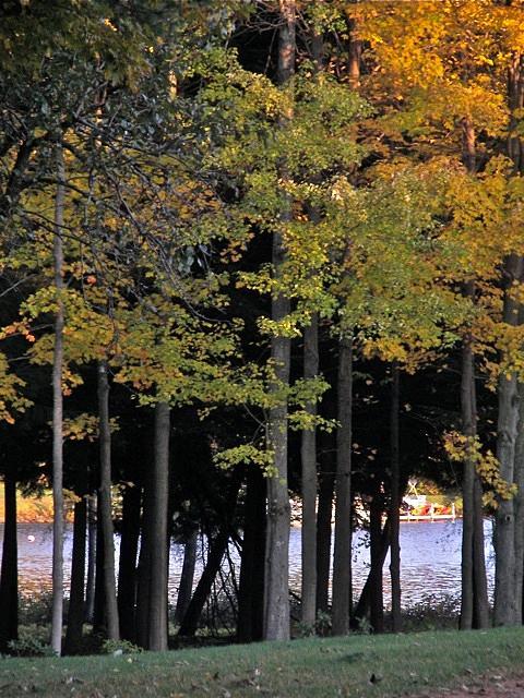 Treestand Photograph - Treestand By Onota Lake by Jess Kielman