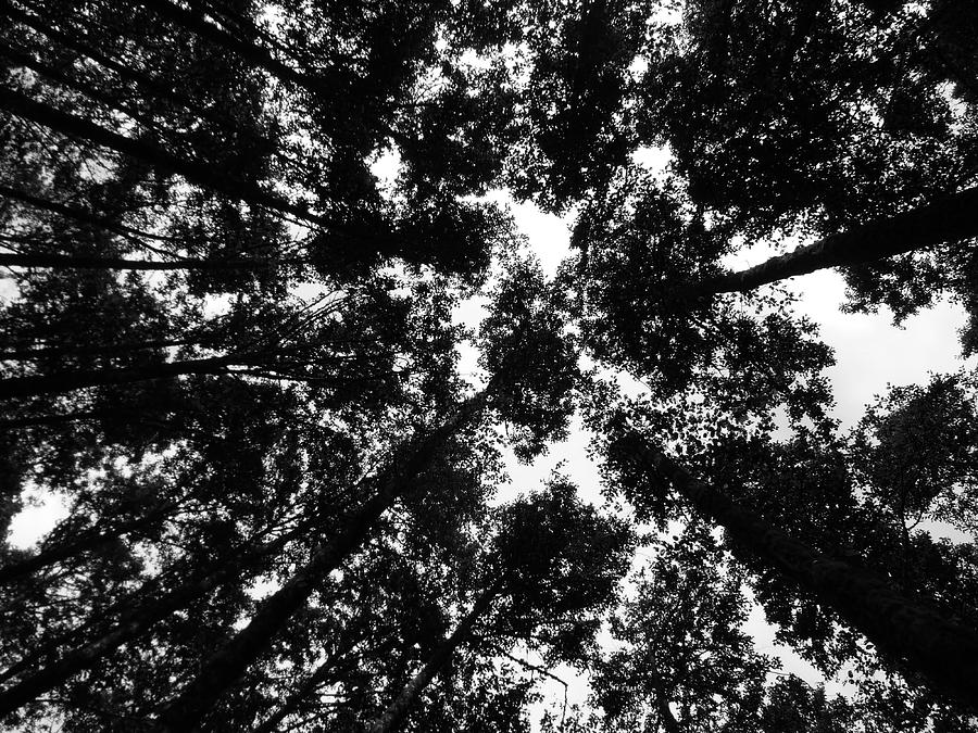Landscape Photograph - Treetops by Mark Camp