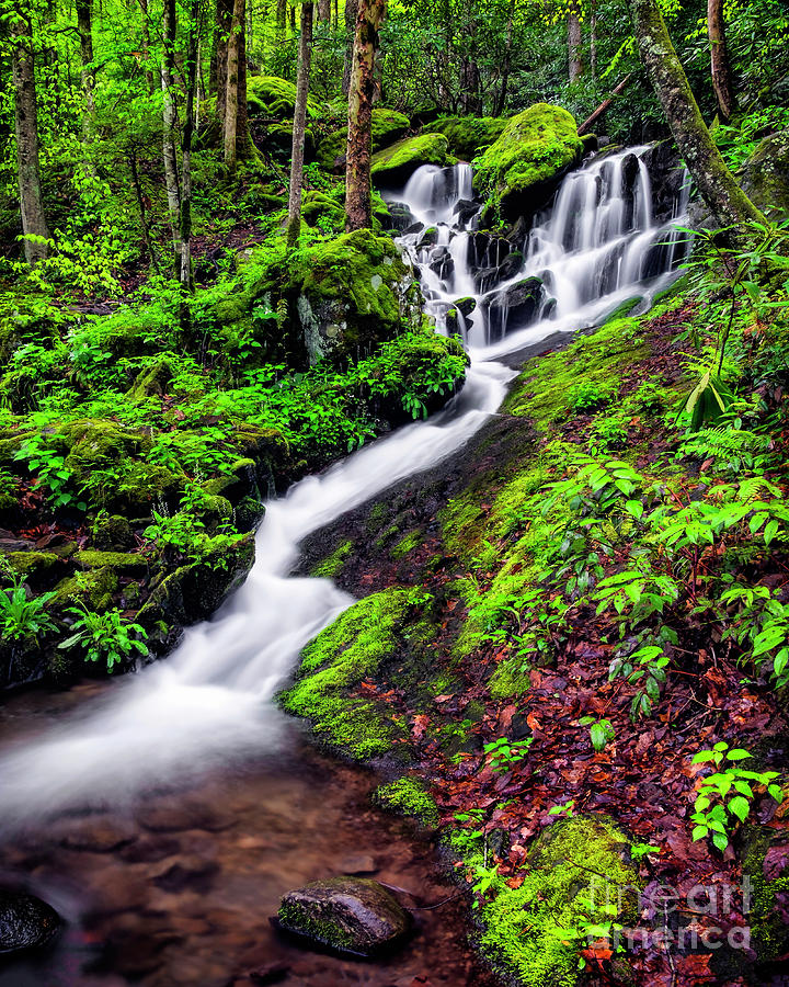 Great Smoky Mountains National Park Photograph - Tremont Area Waterfall by Madonna Martin