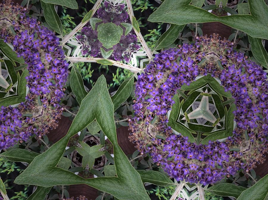 Nature Photograph - Triangle Surrounded by Sylvan Adams