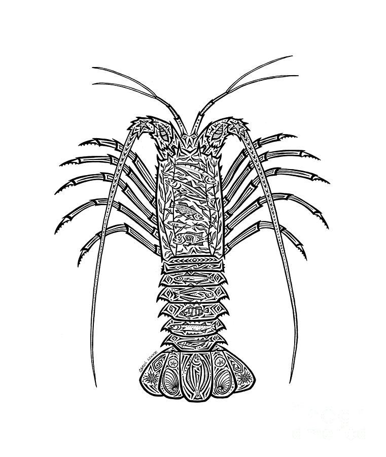 tribal spiny lobster drawing by carol lynne