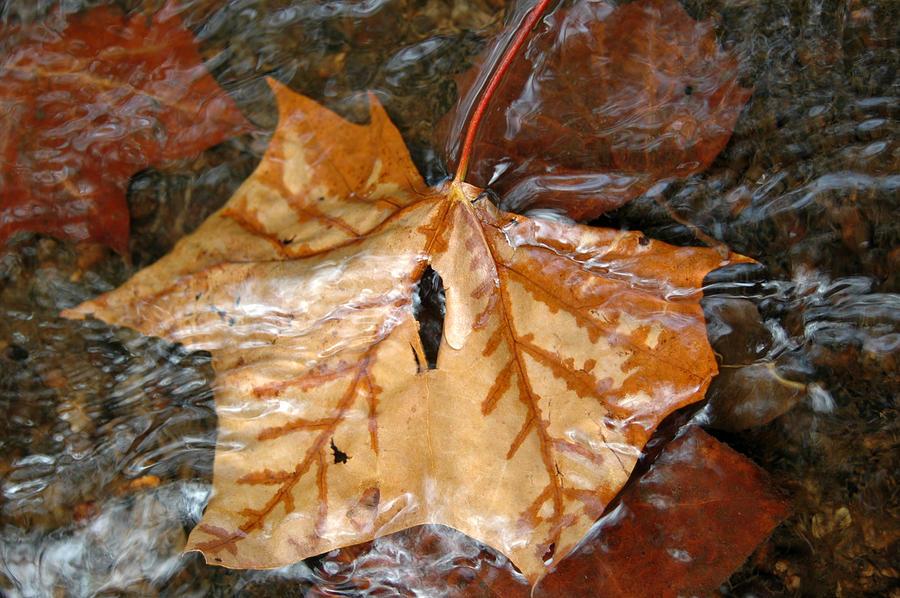 Autumn Photograph - Tributaries by Deborah Gallaway